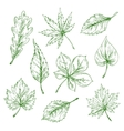green sketched leaves forest and garden trees vector image