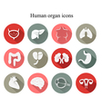 Set of human organs flat icons vector image