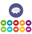 bright flower icons set color vector image vector image