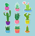 cactus home plants in pots with flowers set vector image