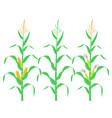 corn stalk vector image vector image