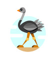 cute ostrich in flat style isolated on white vector image vector image