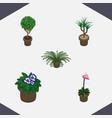 isometric flower set of flowerpot plant vector image vector image
