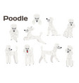 poodledog in actionhappy dog vector image