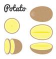 set of potato half and slice potato vector image vector image