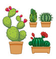 cactus in flowerpot hand drawn set collection vector image