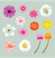 set spring flowers colorful isolated background vector image vector image