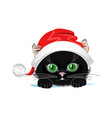 cat in hat vector image