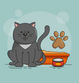 cute cat with sand vector image