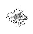 hand drawn garden flower isolated vector image