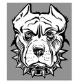 Pitbull vector image vector image