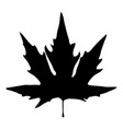 black silhouette of maple leaf on white vector image