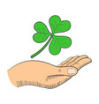 a hand with three-leaved shamrock vector image vector image