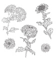 floral decorations set vector image vector image