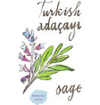 watercolor sage vector image vector image