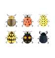 Insect icons Ladybird set vector image