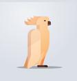 cockatoo icon cute cartoon wild animal symbol vector image vector image