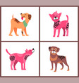 dogs of pure breeds isolated set vector image vector image