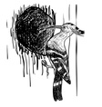 Drawing of woodpecker bird vector image vector image