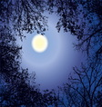 Night forest gainst the night sky in a full moon vector image vector image