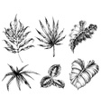Various leaves hand drawing vector image vector image