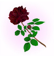 black rose with bud stem vintage vector image vector image