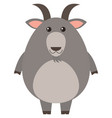 gray goat with happy face vector image vector image