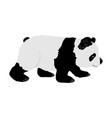 Panda isolated on white