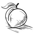 peach drawing on white background vector image