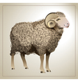 Realistic Sheep vector image