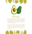avocado alligator pear exotic juicy fruit vector image