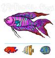 bright tropical sea fish vector image vector image