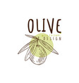 olive on a branch olive oil label with olives hand vector image vector image