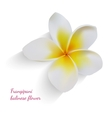 Balinese flower frangipani on isolated white vector image vector image