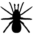 black silhouette a spider vector image vector image