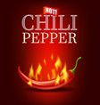 burning hot chili pepper with flame on red vector image vector image