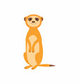cute meerkat isolated on vector image vector image