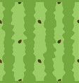 green watermelon texture seamless pattern for vector image vector image