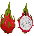 pitahaya isolated on white background vector image vector image