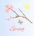 Spring twig of cherry and butterfly vector image vector image
