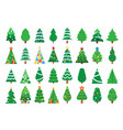 christmas trees decorated new year tree green vector image