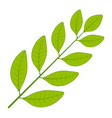 laurel tree branch laurel leaf branch vector image