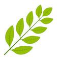 laurel tree branch leaf branch vector image