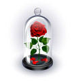 red rose under the dome on white background vector image vector image