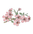 vintage flowers cherry vector image vector image