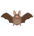 brown bat with happy face vector image