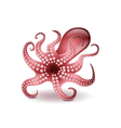 Octopus isolated on white vector image vector image