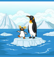 cartoon penguin playing on ice floe vector image