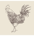 Vintage design with rooster vector image vector image