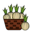 wicker basket with fresh onion vector image